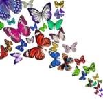 Animale totem farfalla