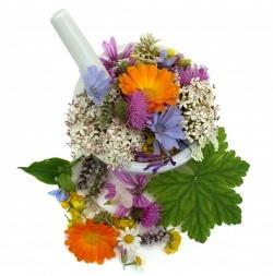 rimedi naturali fiori e piante