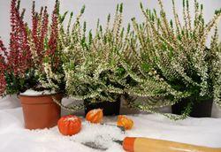 orto e giardino a dicembre